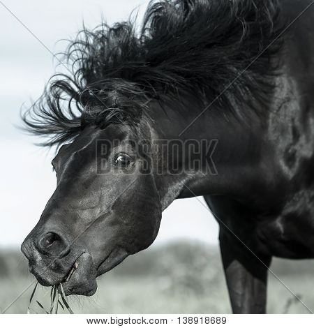 Funny portrait of horse at summer day