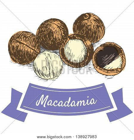 Vector colorful illustration of macadamia nuts. Illustrative sorts of nuts