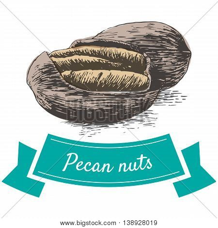 Vector colorful illustration of pecan nuts. Illustrative sorts of nuts