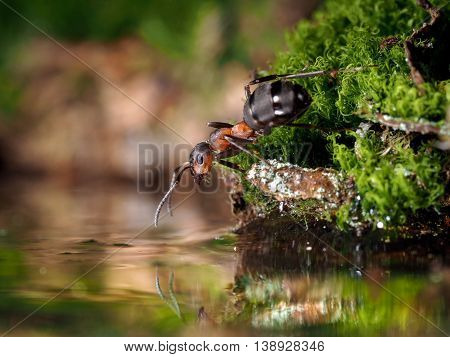 Ant standing on the bank of the creek forest and stretches to the water