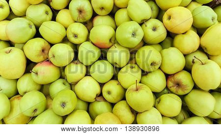 Background of fresh green apples. Common apple plan