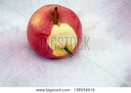 Little wasp eats a big delicious apple