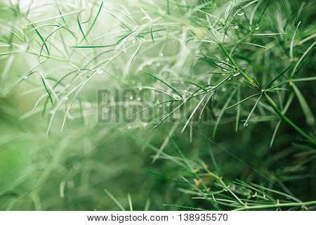 Abstract natural background with shallow depth of field raindrops on plant leaves selective focus