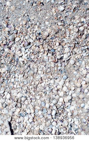 Seashell background lots of different seashells piled together
