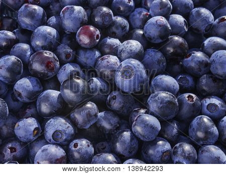Close up photo of blueberries. Fresh ripe juicy bilberries bright autumn colorful background. Concept for healthy diet with berries. Selective Soft focus