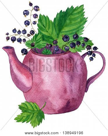 teapot of tea with black currant leaves and berries, drawing in watercolor, hand drawn illustration