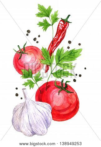 watercolor drawing vegetables, chili pepper, parsley leaves, black peper, red tomato and garlic, hand drawn illustration