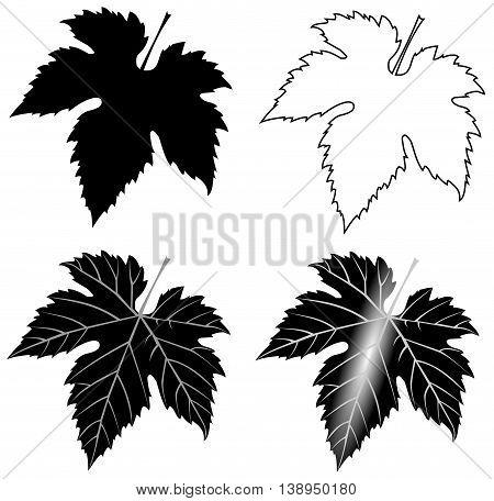 isolated fig leaf , fig leaf illustration , garden
