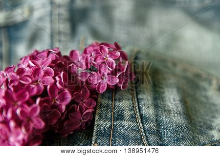 Branch of Purple Lilac in the Jeans Pocket.Background