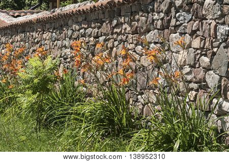 Lilium hybrid flowers against house stone wall background