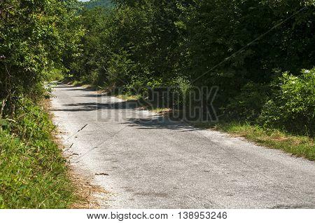 Asphalt country road through green vegetation in sunny summer time