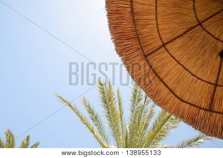 Thatched umbrella with palm trees and blue sky
