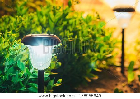 Decorative Small Solar Garden Light, Lanterns In Flower Bed In Green Foliage. Garden Design. Solar Powered Lamp