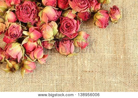 Dried pink  rose hips on linen cloth. Closeup