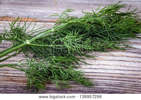 dill herb on wooden table Dill Anethum graveolens is an annual herb in the celery family Apiaceae.