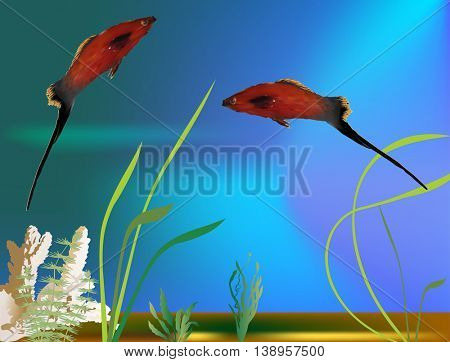 illustration with two platyfishes in aquarium