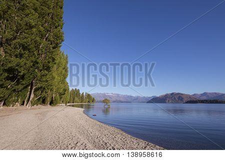 That Wanaka Tree and Lake Wanaka shoreline, Roys Bay, Wanaka, New Zealand