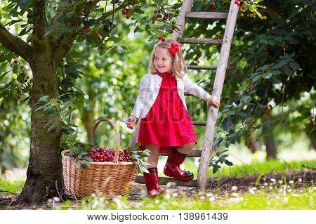 Kids picking cherry on a fruit farm. Children pick cherries in summer orchard. Toddler kid eating fresh fruit from garden tree. Little farmer girl with berry in a basket. Harvest time fun for family