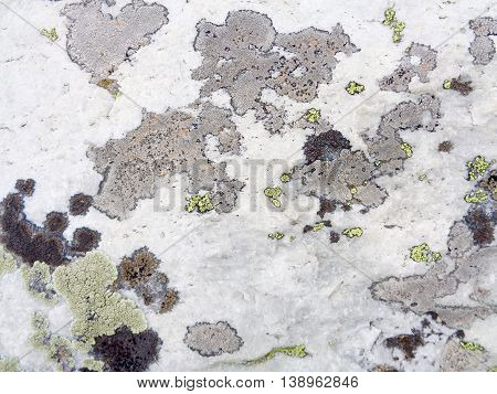 Close up of stone surface and lichen