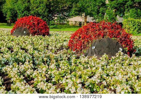 Summer park landscaping view - flowerbeds with landscaping elements in form of ladybirds covered with red begonia flowers. Unusual funny landscaping in the summer park.