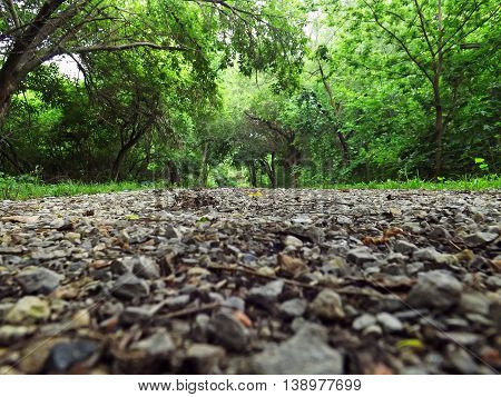 Ground view of  a pathway through the woods.