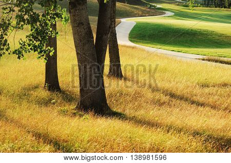 tree, grassland in the sunlight with winding road aside
