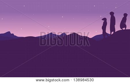 At night meerkat landscape silhouette vector illsutration