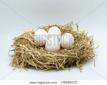 Four duck eggs in the hay nest on white background.