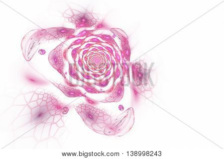 Abstract colorful rose flower on white background. Fantasy pink fractal design for postcards or t-shirts.