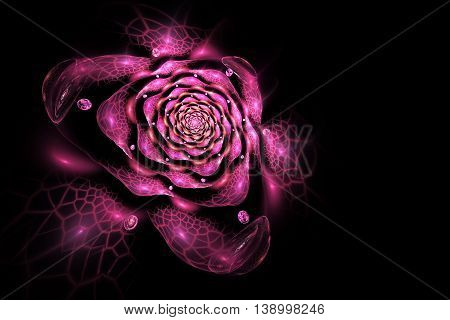 Abstract colorful rose flower on black background. Fantasy fractal design for postcards or t-shirts.