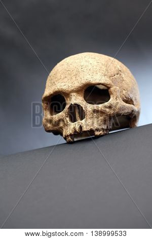 Death concept. One human skull on dark background with free space