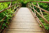 stock photo of redwood forest  - boardwalk in forest - JPG