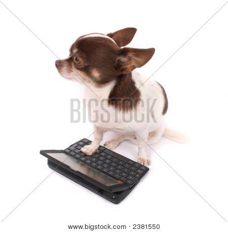 Chihuahua und ihre tragbaren pc