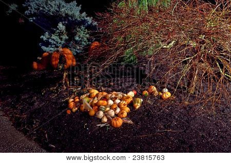 Many Gourds And A Pumpkin At Night Outdoors