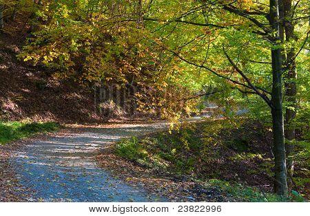 Autumn Mountain Dirty Road