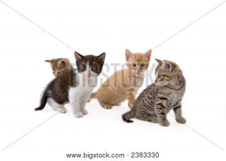 Four Kittens Sits On The Floor, Isolated