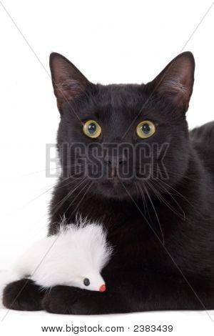 Black Cat & White Mouse