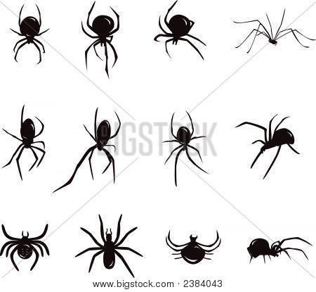 Spiders Siluet