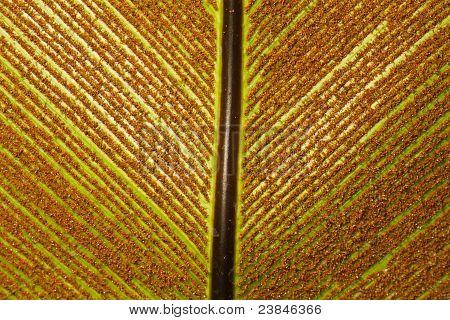 birdnest fern leaf background