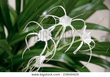 Blooming flower