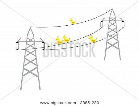 Birds sitting on a wires