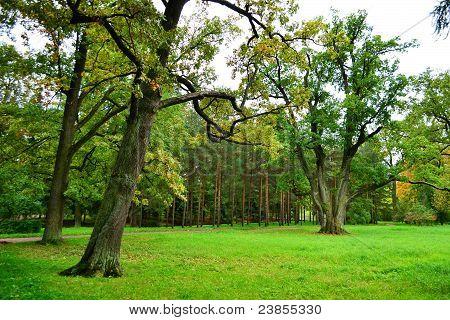 Park in Tsarskoe Selo