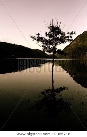Tree In Flooded Lake