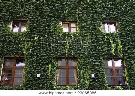 House Covered With Green Leaves