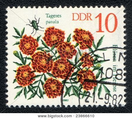 Tagetes Patula With Insect