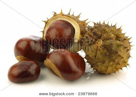 freshly fallen chestnuts(Aesculus hippocastanum) and some shells