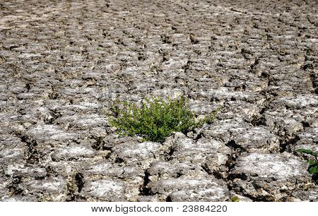 green plant in dried cracked mud