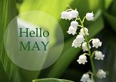 Hello May Greeting Card With Lily Of The Valley Flower On A Blurred Green Leaves Background.springti poster