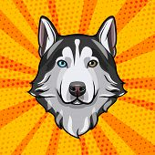 Siberian Husky Head. Dog Portrait. Dog Breed. Vector Illustration Isolated On Colorful Background. poster
