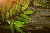 Cinnamon Leaf, Tropical Leaf, Wooden Table, Seasoning Leaf poster